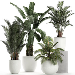 3D model plants white potted