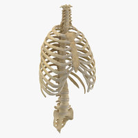 Real Human Rib Thoracic Cage and Spine Bones Anatomy 01