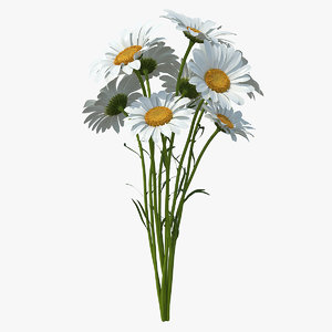 3D model bouquet chamomile flowers