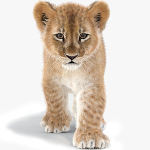 baby lion fur animation 3D model