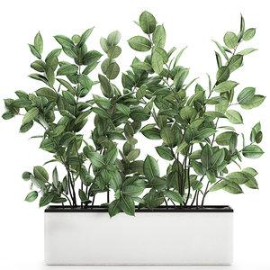 decorative trees pots ficus 3D model