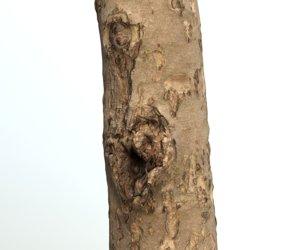 3D tree apple trunk