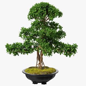 bonsai tree plastic pot 3D model