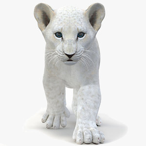 white lion cub modeled 3D model