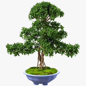 green bonsai tree pot 3D model