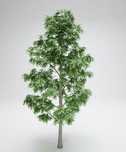 3D acacia tree model
