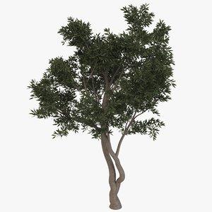fruitless olive tree 3D model