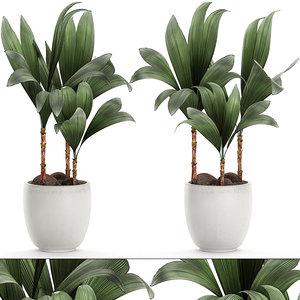 3D decorative palm tree interior