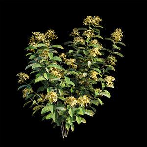 3D ixora plant set 04