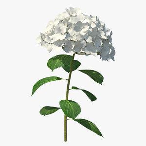 white hydrangea flower branch 3D
