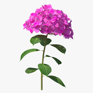 3D branch hydrangea macrophylla pink
