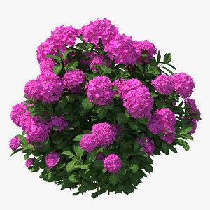 hydrangea macrophylla pink annabelle model