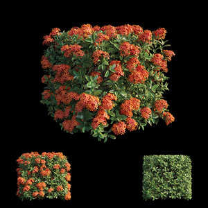 ixora plant set 12 model