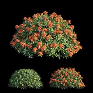 ixora plant set 10 model