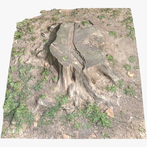 tree stump 001 scan 3D model