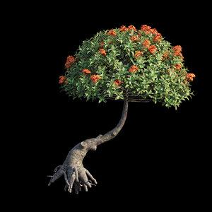 ixora plant set 13 3D model