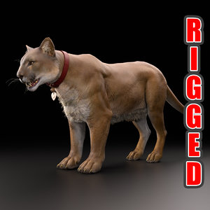 3D mountain lion cougar rigged model