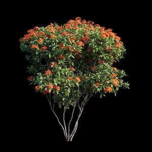 3D ixora plant set 06