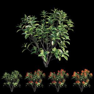 3D model ixora plant set 08