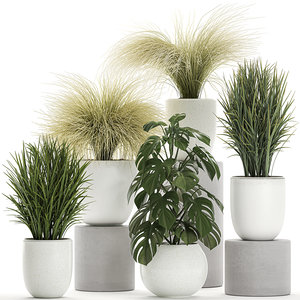 ornamental plants white potted 3D model