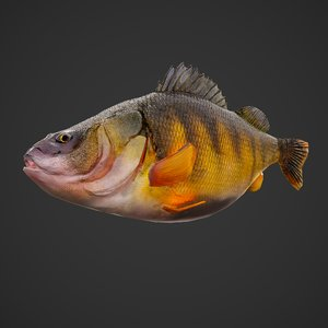 3D perch scaled model