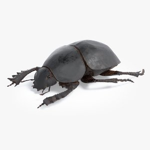 realistic scarab dung beetle 3D model