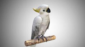 3D model cockatoo white parrot