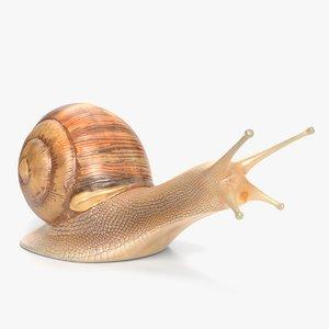 snail nature animal 3D model