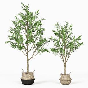 olive trees model