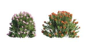plant set 3D model