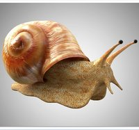 Realistic High Detailed Really Low Poly Snail