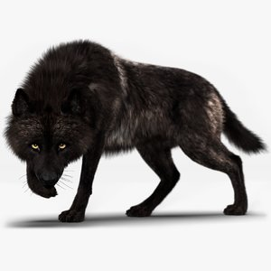 black timber wolf fur model
