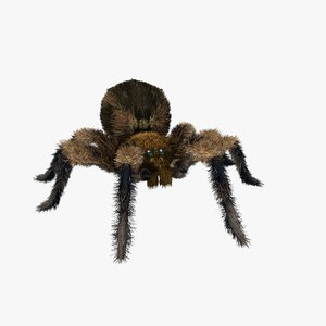 3D jumping spider
