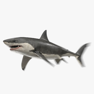3D great white shark animation sea