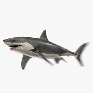 3D great white shark animation sea