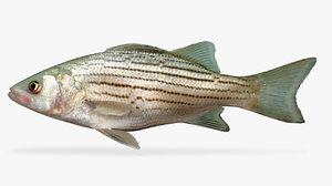 3D texthybrid striped bass