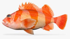 3D flag rockfish