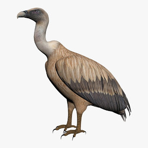 vulture model