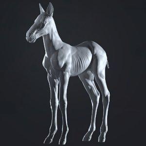 realistic horse foal 3D model