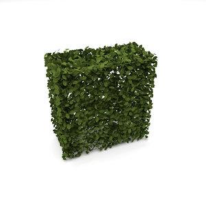 hedge bush shrub 3D model