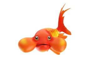 3D bubble eye fish toon
