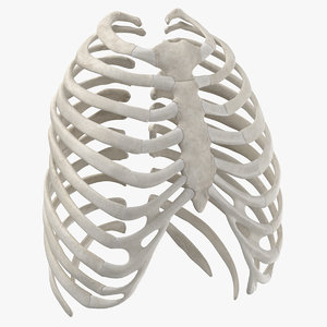 human rib thoracic cage anatomy 3D model