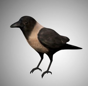 crow city rigged 3D model