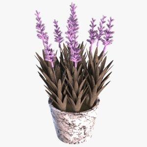 lavender plant 3D model
