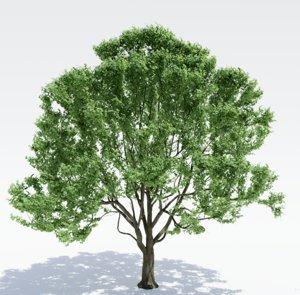 tree alnus 3D model