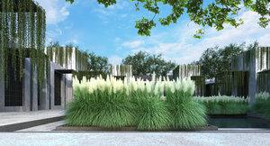 dwarf pampas grass 3D