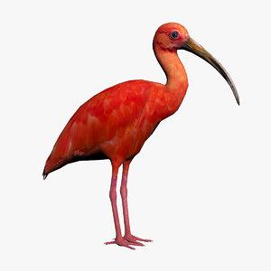 3D scarlet ibis model