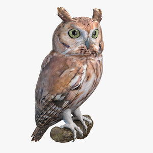 eastern screech owl model