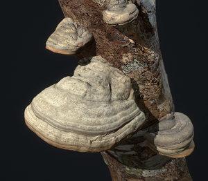 tinder polypore fungus mushroom 3D model