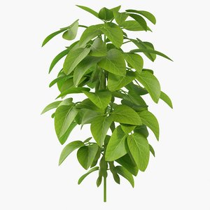 3D soybean plant